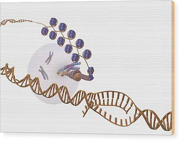 Gene Expression, Artwork Wood Print by Science Photo Library