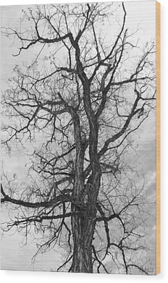 Genoa Tree Wood Print