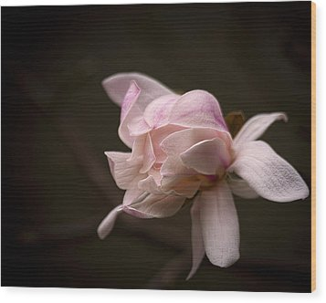 Wood Print featuring the photograph Gentle by Cheri McEachin