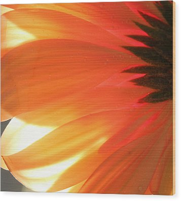 Gentle Flame Wood Print