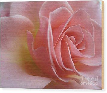 Gentle Pink Rose Wood Print