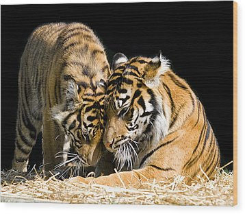 Gentle Touch Wood Print by Gary Neiss