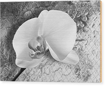 Gentle White Orchid Wood Print by Ron Regalado