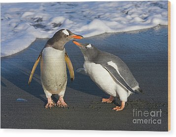 Gentoo Penguin Chick Begging For Food Wood Print by Yva Momatiuk and John Eastcott