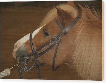 Wood Print featuring the photograph Genuine Pony by Jerome Lynch