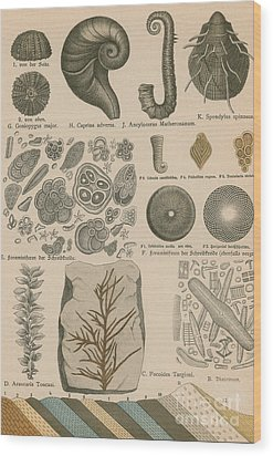 Geology And Paleontology 1886 Wood Print by Science Source