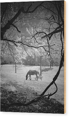Wood Print featuring the photograph Georgia Horses by Bradley R Youngberg
