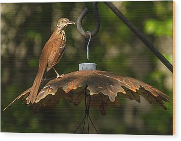 Wood Print featuring the photograph Georgia State Bird - Brown Thrasher by Robert L Jackson