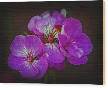 Wood Print featuring the photograph Geranium Blossom by Hanny Heim