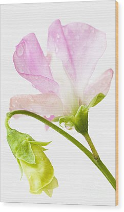 Geranium Pink Wood Print by Anne Gilbert