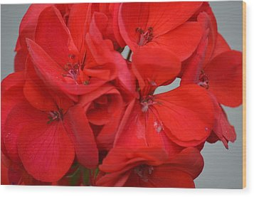 Geranium Red Wood Print
