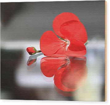 Geranium Reflections Wood Print by  Andrea Lazar