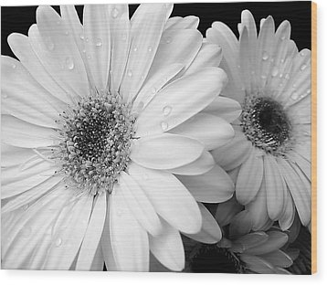 Gerber Daisies In Black And White Wood Print by Jennie Marie Schell