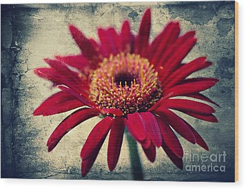 Gerbera Wood Print by Angela Doelling AD DESIGN Photo and PhotoArt