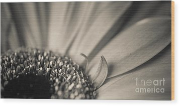 Gerbera Blossom - Bw Wood Print by Hannes Cmarits
