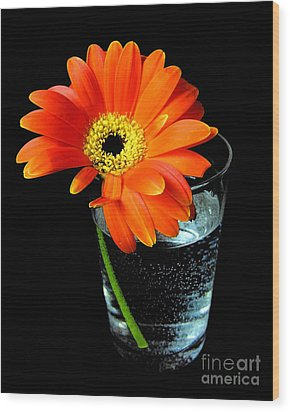 Gerbera Daisy In Glass Of Water Wood Print by Nina Ficur Feenan