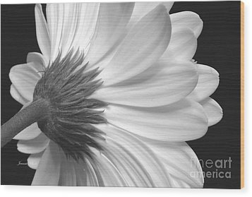 Gerbera Daisy Monochrome Wood Print