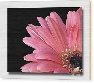 Wood Print featuring the photograph Gerbera Encore by Chris Anderson