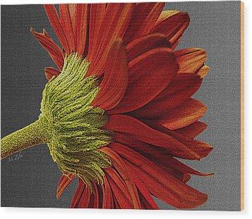 Gerbera In Red Wood Print by Megan Washington