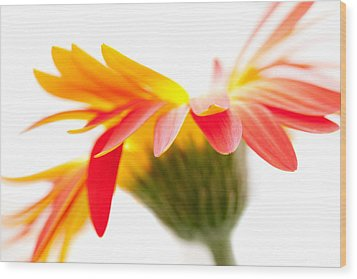 Gerbera Mix Crazy Flower - Orange Yellow Wood Print by Natalie Kinnear
