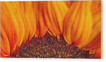 Wood Print featuring the photograph Gerbera On Fire by Adam Romanowicz