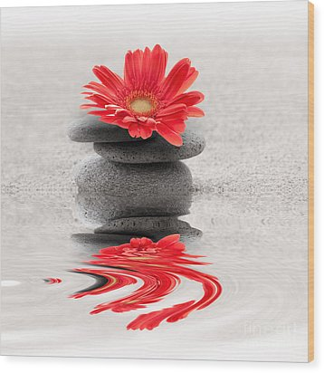 Gerbera Reflection Wood Print by Delphimages Photo Creations