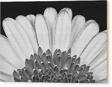 Gerbera Rising Wood Print by Adam Romanowicz