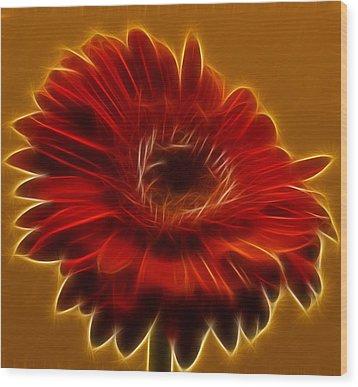 Gerbia Daisy Wood Print