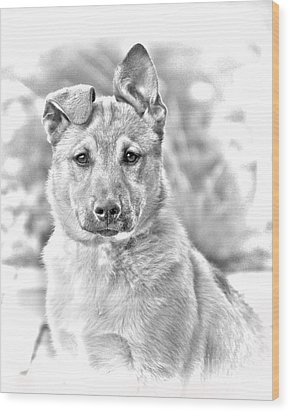 German Shepard Puppy Wood Print by James BO  Insogna
