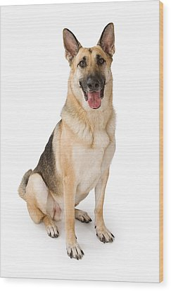 German Shepherd Dog Isolated On White Wood Print by Susan Schmitz