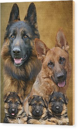 German Shepherd Family Collage Wood Print by Sandy Keeton