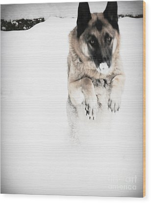 Wood Print featuring the photograph German Shepherd In The Snow by Tanya  Searcy