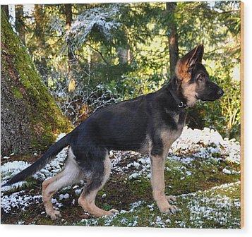 German Shepherd Pup Wood Print by Tanya  Searcy