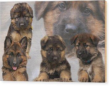 German Shepherd Puppy Collage Wood Print by Sandy Keeton
