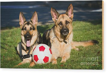 Wood Print featuring the photograph German Shepherd Sisters by Eleanor Abramson