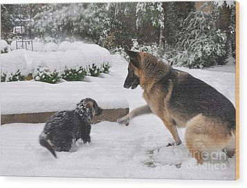 Wood Print featuring the photograph German Shepherds Playing In The Snow by Tanya  Searcy