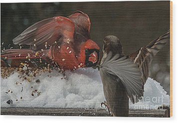 Get Off My Feeder Wood Print