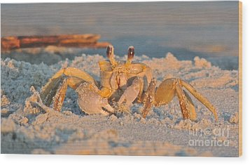 Ghost Crab Wood Print by Eve Spring
