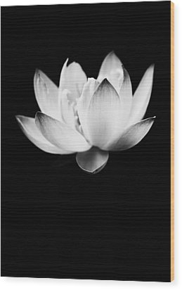 Ghost Lotus Wood Print by Priya Ghose