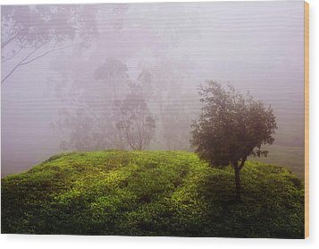 Ghost Tree In The Haunted Forest. Nuwara Eliya. Sri Lanka Wood Print by Jenny Rainbow