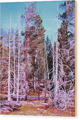 Ghost Trees Of The Yellowstone Wood Print by Ann Johndro-Collins