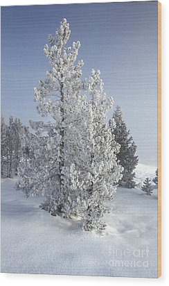 Ghost Trees Of Yellowstone Wood Print by Sandra Bronstein