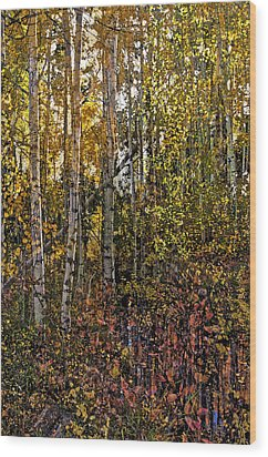 Ghosts Of A Quaking Aspen Wood Print