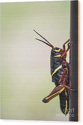 Giant Eastern Lubber Grasshopper Wood Print by Edward Fielding