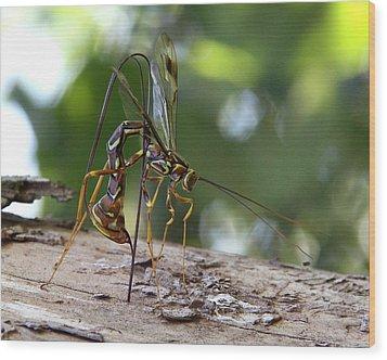 Giant Ichneumon Wasp Wood Print