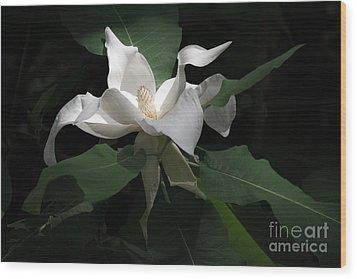 Giant Magnolia Wood Print by Angela DeFrias