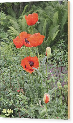 Wood Print featuring the photograph Giant Poppies by David Grant
