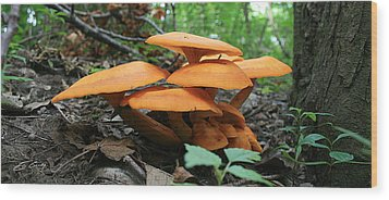 Wood Print featuring the photograph Giant Red Mushrooms by Ed Cilley
