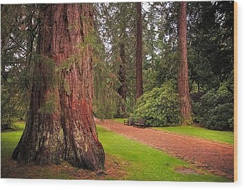Giant Sequoia Or Redwood. Benmore Botanical Garden. Scotland Wood Print by Jenny Rainbow