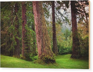 Giant Sequoias. Benmore Botanical Garden. Scotland Wood Print by Jenny Rainbow